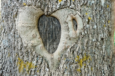 fidelity: the natural image in the form of heart on a tree trunk as an abstract symbol of love and fidelity