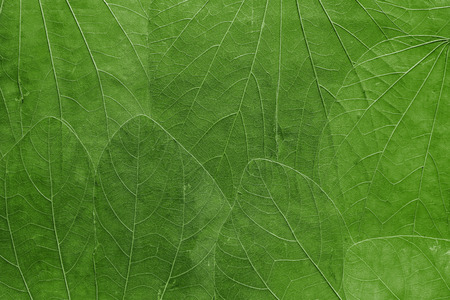leaf color: the abstract textured background a collage from big leaves of bright green color closeup