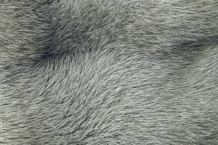 ashy: soft and fluffy old fur for the abstract textured backgrounds Stock Photo