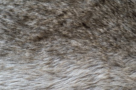 shaggy: the shaggy abstract textured background of old wolf fur