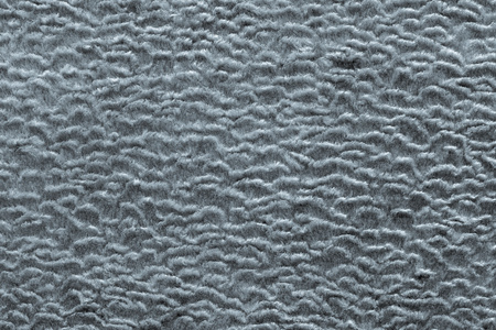 shorthaired: abstract texture of silvery color of short-haired fur fabric with wavy curls for empty backgrounds