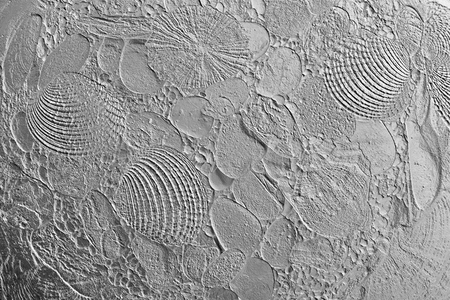 imprinted: abstract imprinted texture of sea cockleshells and stones for empty and pure gray backgrounds Stock Photo