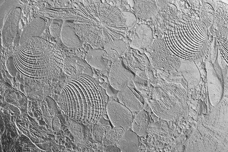 gray backgrounds: Resumen de la textura impresa de cockleshells de mar y piedras para los fondos grises vac�as y puros