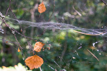 abstractly: the autumn foliage and spiderweb abstractly hang in air space in the wild wood