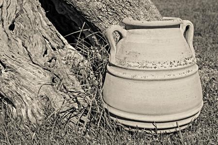 greek pot: una grande antica primo piano piatto in ceramica contro un tronco di un vecchio albero con una cavità