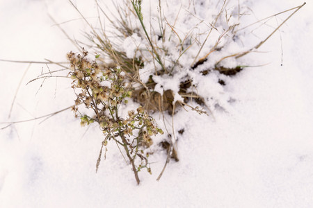 snowdrifts: winter snowdrifts from white brilliant snow and an old dry grass for abstract natural backgrounds Stock Photo