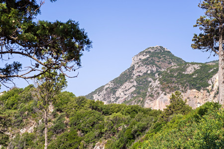 thickets: wild green thickets and top of the rocky mountain against the blue sky