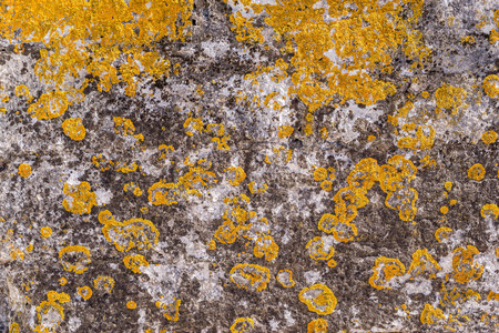 decayed: old abstract texture of a decayed stone surface for a background and for wallpaper