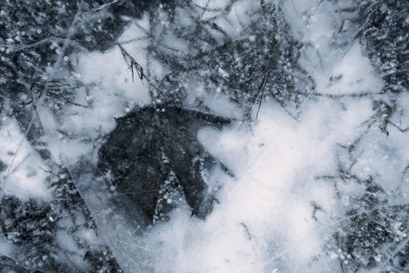 silvery: silvery transparent texture of natural ice of with a leaf plant for abstract background