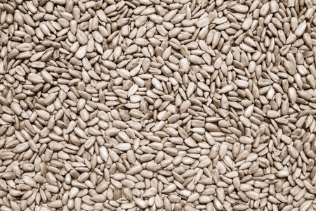 cleared: the textured background from the cleared sunflower grains for abstract food wallpaper