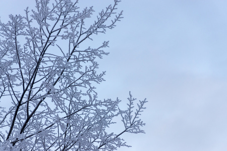 separately: tree branches with snow and hoarfrost separately against the sky