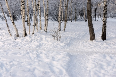 glade: landscape of a winter forest and glade with snowdrifts and a footpath in the wood Stock Photo