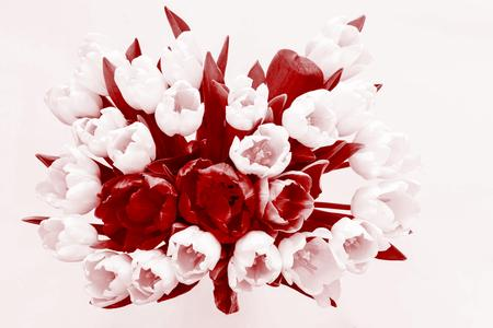 claret: big bouquet of flowers from tulips in monochrome tone of claret color and isolated closeup