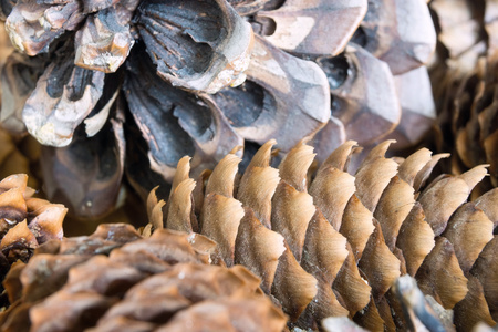vague: vague abstract texture a closeup of the old coniferous cone for a natural background Stock Photo