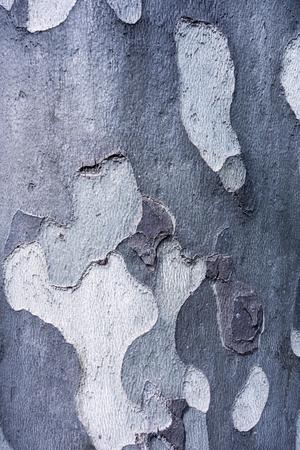 spotty: abstract spotty texture of old bark of wood of silvery color for natural backgrounds and for wallpaper
