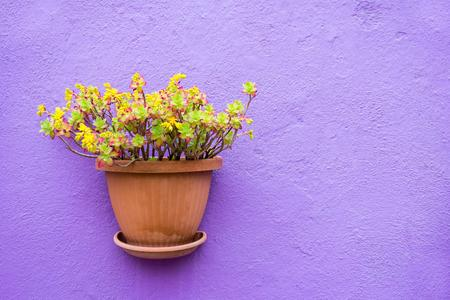 vase plaster: one ceramic pots with flowers or with houseplants are located isolated closeup on the plastered stone wall and a blank space for the text Stock Photo