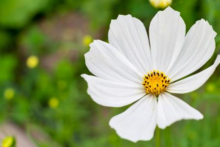 located: one isolated decorative white flower is located a closeup on an indistinct background
