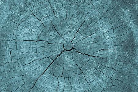 transverse: wooden transverse texture with cracks on the old stump closeup for a natural abstract background of blue color Stock Photo
