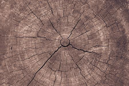 transverse: wooden transverse texture with cracks on the old stump closeup for a natural abstract background of brown color Stock Photo