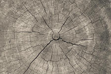 transverse: wooden transverse texture with cracks on the old stump closeup for a natural abstract background of beige color Stock Photo