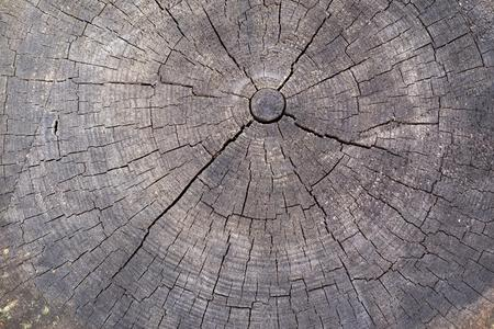 transverse: wooden transverse texture with cracks on the old stump closeup for a natural abstract background