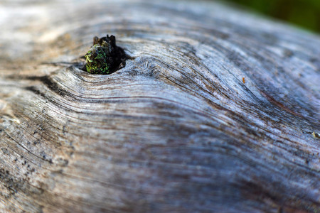 background and abstract indistinct texture of an old tree with a knot or with a twig