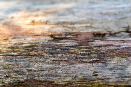 background and abstract indistinct texture of an old tree Фото со стока