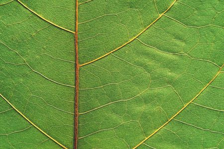 background and abstract natural texture of a part of leaves of a plant closeup