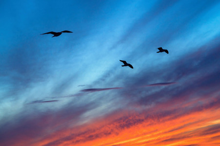 three seagulls in the foreground in the blue sky with red clouds on a sunset Stock Photo