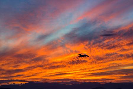 zonsondergang op de grote rode hemel met wolken en met een zeemeeuw op de voorgrond