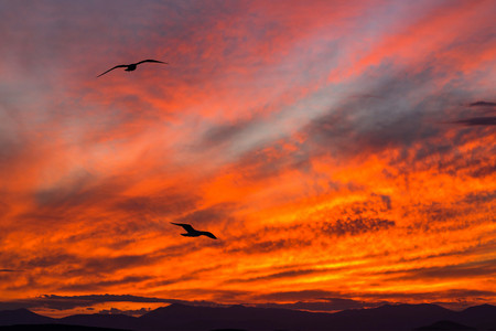 sunset on the big red sky with clouds and with two seagulls in the foreground