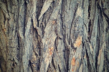 background and texture of old wooden bark closeup