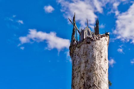 one broken and empty trunk of an old tree is located separately against the background of the blue sky with white clouds