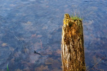 one wooden old and rotten column or trunk of the broken tree against the background of water in an autumn pond Stock Photo - 116545225