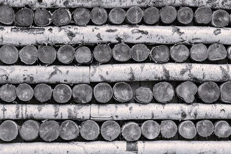 texture trees of birch firewood in a stack for an abstract background of monochrome tone 写真素材