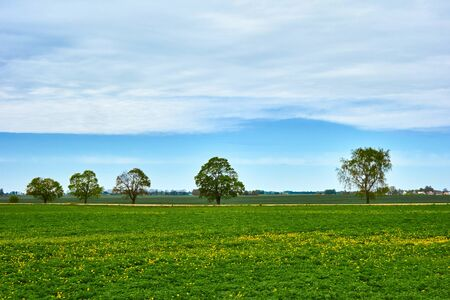magnificent natural landscape of rural areas with a green meadow and separate trees along the road against the background of the blue sky