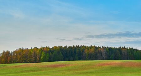 rural landscape with the forest area on the green field or on a meadow and against the background of the blue sky