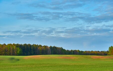 rural landscape with trees on the green field or on a meadow and against the background of the blue cloudy sky 写真素材