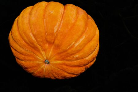 One large orange pumpkin closeup against a black background isolated 写真素材