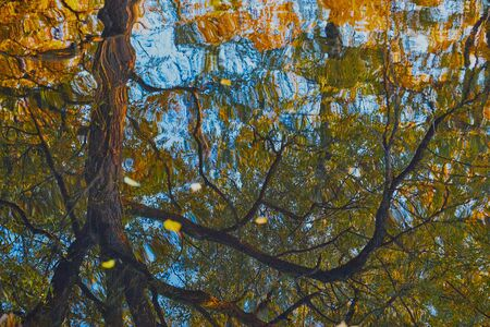 textured abstract reflection of autumn trees with a crooked branch and blue sky in water with ripples for a natural background