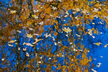 Autumn foliage on water for abstract natural background or for wallpaper