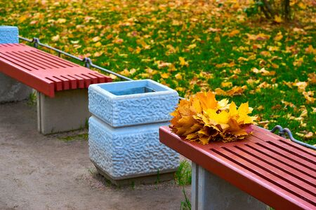 Bouquet of yellow maple leaves or foliage on a red bench closeup in autumn park 写真素材
