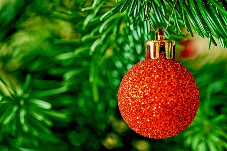 One shiny red ball close-up on a green coniferous branch for Christmas or for New Year s Eve decoration 写真素材