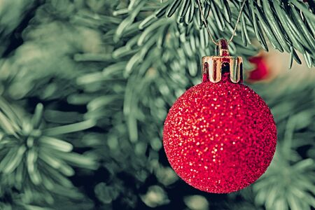 One shiny red ball closeup on a green coniferous branch for New Year s Eve decoration in vintage style