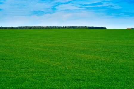 agricultural landscape of the hilly field with green shoots of plants against the background of the blue sky 版權商用圖片