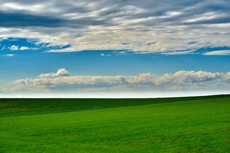agricultural landscape of the big green field against the background of the blue sky with white clouds