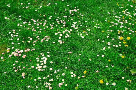 meadow with green grass and small flowers for natural background closeup 写真素材