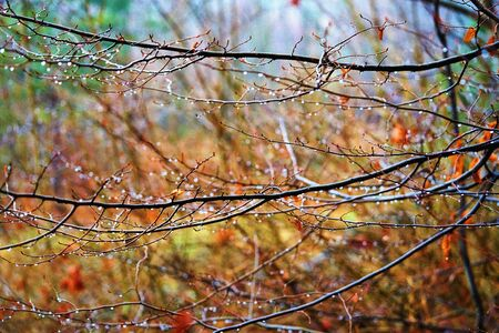 abstract landscape of wet tree branches with selective sharpness and drops of water closeup on a blurry multicolored background