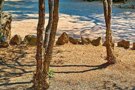 abstract landscape of tree trunks with shadow and stones on an empty sandy ground surface