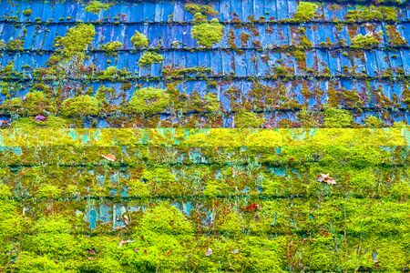 Old rotten wooden roof is covered partially with green moss for an abstract textured background